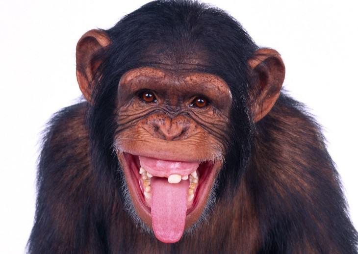 Človek alebo len pekne oblečená opica?
